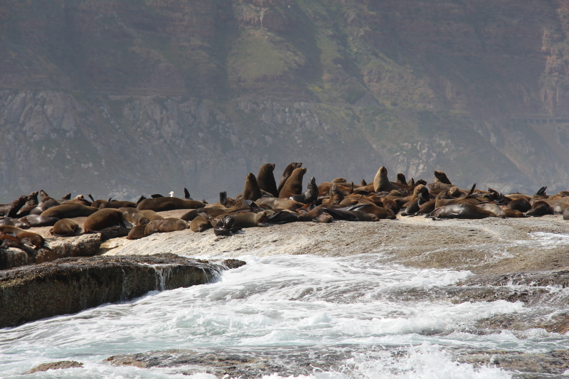 Seal Island Hout Bay Cape Town